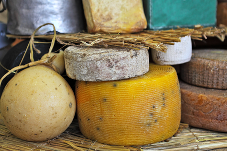 piedmont: Different types of mature cheese on the stand on International Cheese Festival in Bra, Northern Italy