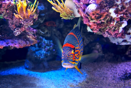 Exotic colorful fish among rocks with corals on the bottom in famous aquarium of Monaco  photo