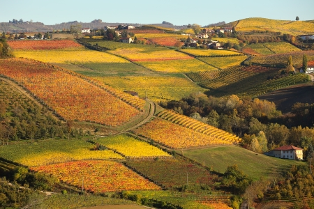 piedmont: View of colorful autumnal vineyards on the hills of Langhe in Piedmont, Northern Italy
