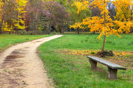 racconigi: Stone bench and unpaved footpath in autumnal park of Racconigi in Northern Italy