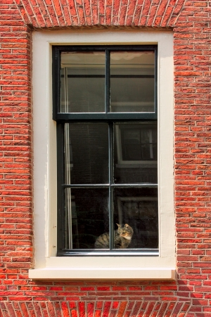 glass brick: Vertical oriented image of cat on windowsill of red brick house in Amsterdam, netherlands  Stock Photo