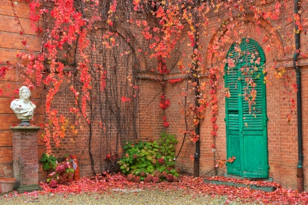 racconigi: Ivy with red leaves grow on red brick wall in autumn in Racconigi park, Northern Italy  Stock Photo