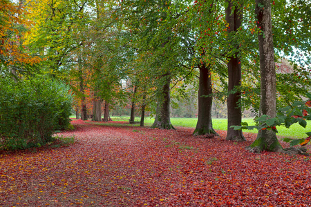 racconigi: Footpath covered with red follen leaves among trees with lush autumnal foliage in Racconigi park, Italy