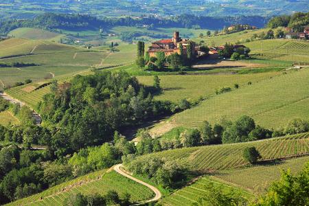 Verdi colline e vigneti delle Langhe al mattino a primavera in Piemonte, Italia