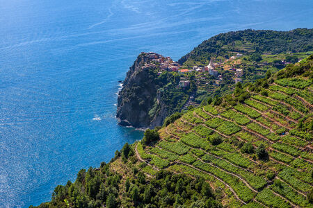 terraced: Small village on the cliff and terraced vineyards on downhill with view on Mediterranean sea in Italy