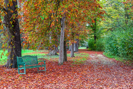 racconigi: Lone bench on the ground covered by fallen red leaves in autumnal park of Racconigi, Italy