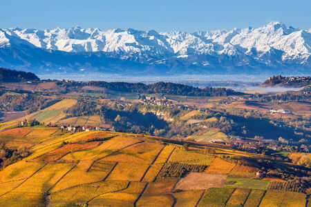 Autumnal hills with yellow and orange vineyards as snowy mountain ridge on background in Piedmont, Northern Italy.