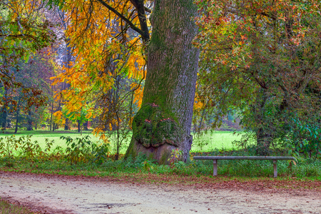 racconigi: Lone stone bench under the tree with big trunk and narrow pathway in autumnal park of Racconigi in Italy.
