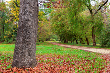 racconigi: Tree trank surrounded by fallen leaves and narrow path in autumnal park in Piedmont, Northern Italy.