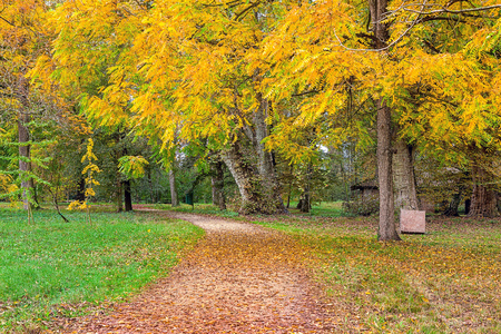 racconigi: Narrow path covered with fallen leaves among trees and plants in the park in Piedmont, Northern Italy.