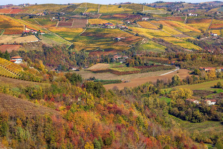 Multicolored autumnal vineyards on the hills in Piedmont, Northern Italy. photo