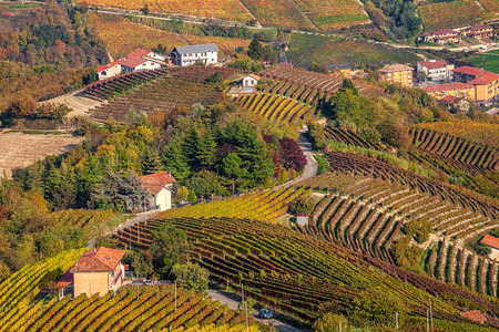 road autumnal: Narrow rural road among colorful autumnal vineyards on the hills of Piedmont, Northern Italy. Stock Photo