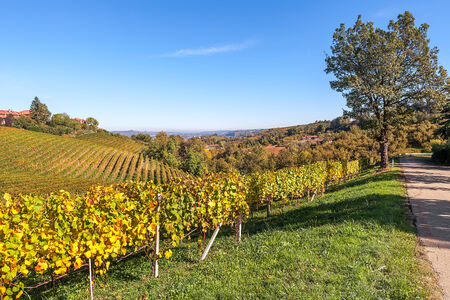 road autumnal: Narrow rural road along autumnal hills and vineyards of Piedmont, Northern Italy.