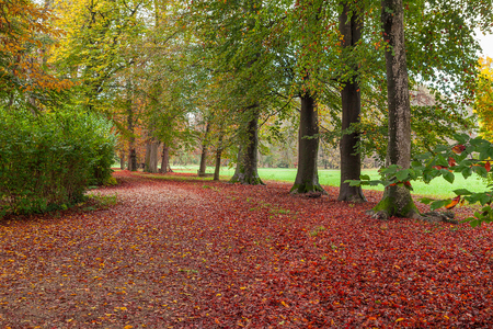 racconigi: Trail covered with fallen red leaves and trees with green foliage in autumnal park of racconigi in Piedmont, Northern Italy. Stock Photo