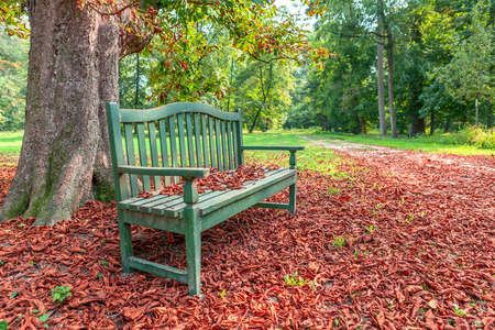 racconigi: Wooden bench under tree on the ground covered with red fallen leaves in autumnal park in Piedmont, Italy.