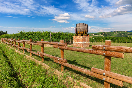 Wooden wine barrel and green vineyards behind rural fence under beautiful sky in Piedmont, Northern Italy.