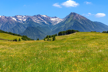 View of green alpine meadow and mountain peaks on background in summer in Piedmont, Northern Italy.