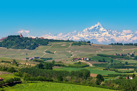 Hills of Langhe with green vineyards as snowy Monviso peak on background under blue sky in Piedmont, Northern Italy. 版權商用圖片