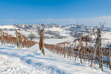 Rows of vineyards on the hill covered with snow under blue sky in Piedmont, Northern Italy.
