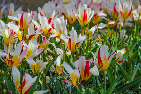 beatiful: Beatiful flowers in the park in Netherlands Stock Photo