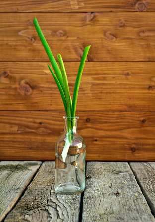 Green spring onions Stock Photo