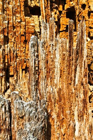 moulder: Decaying trees