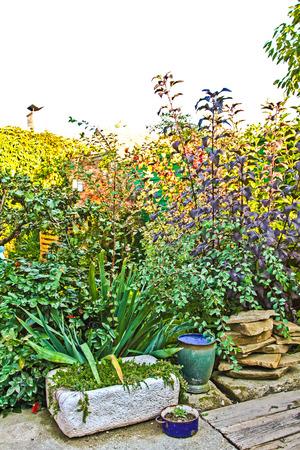 small garden: Overgrown small garden
