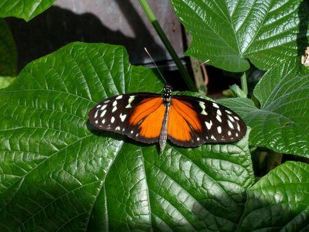 Orange and Black Butterfly Reklamní fotografie