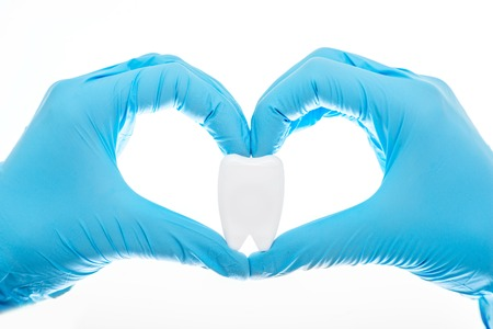 Holding in hands atificial tooth in gloves on white background
