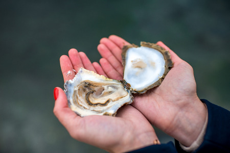 opened: Holding fresh opened oyster in hands on water background Stock Photo