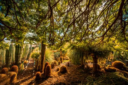manrique: Cactus garden in San Nicolas on Gran Canaria island