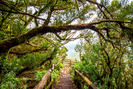 tropical evergreen forest: Evergreen forest in Garajonay national park with viewpoint terrace on La Gomera island in Spain