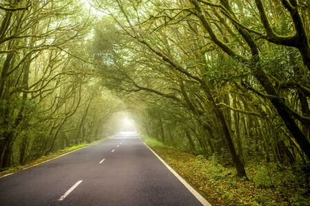 tropical evergreen forest: Road through evergreen forest in Garajonay national park on La Gomera island in Spain