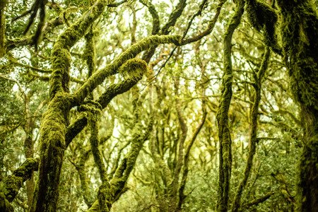 tropical evergreen forest: Close-up view on evergreen forest in Garajonay national park on La Gomera island in Spain Stock Photo