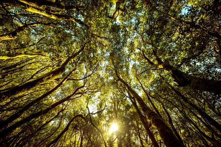 Mooie altijdgroene bos in nationaal park Garajonay op La Gomera eiland. Brede hoek mening met kopie ruimte Stockfoto