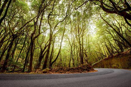 evergreen forest: Asphalt road in evergreen forest in Garajonay national park on La Gomera island.