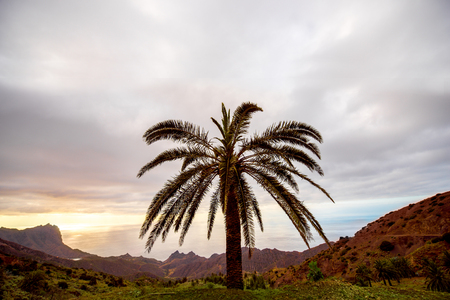 western part: Landscape view with palm tree on the western part of La Gomera island near Alojera village in Spain