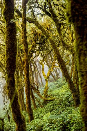 evergreen forest: Beautiful evergreen forest in Garajonay national park on La Gomera island in Spain Stock Photo
