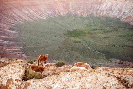 View on the crater of Caldera Blanca volcano with sheeps on the sunset on Lanzarote island in Spain