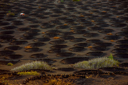 vinery: Top view on volcanic vineyard with vineholes near La Geria village in the morning on Lanzarote island  in Spain Stock Photo