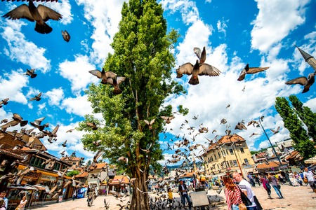 squire: SARAJEVO, BOSNIA - HERZOGOVINA -CIRCA JUNE 2015: Crowded old market squire with pigeons on the north bank of the river Miljacka in the municipality of Stari Grad in Sarajevo. Editorial