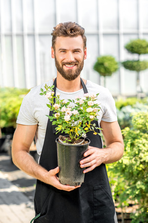 flower seller: Portrait of a handsome gardener holding a pot with flower in the greenhouse. Plant seller taking care of flowers in the shop