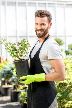flower seller: Portrait of a handsome gardener in apron and working gloves holding a pot with flower in the greenhouse. Plant seller taking care of flowers in the shop Stock Photo