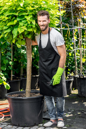 Handsome gardener in black apron carrying a tree. Plants delivery. Customer service in the plants store Stock Photo