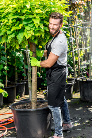 consignment: Handsome gardener in black apron carrying a tree. Plants delivery. Customer service in the plants store Stock Photo