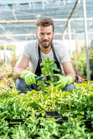 hotbed: Portrait of a handsome gardener in apron with green plants. Worker taking care of plants in the hotbed.