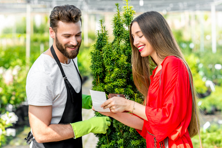 tree service: Handsome plant seller with woman buying conifer tree. Customer service in the plant store