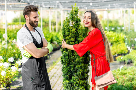 smiling woman in a greenhouse: Handsome plant seller with woman buying conifer tree. Customer service in the plant store