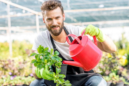 hotbed: Handsome gardener in apron watering flowers with pink watering can. Worker taking care of plants in the hotbed