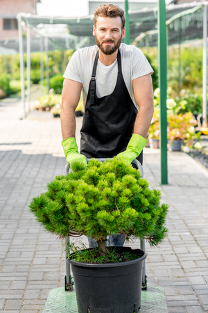 flower seller: Handsome flower seller carrying a tree with trolley in the plant store. Customer service and delivery in the flowers shop